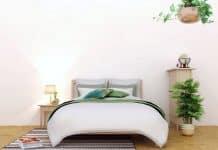 Optez pour une décoration d'intérieur avec des plantes